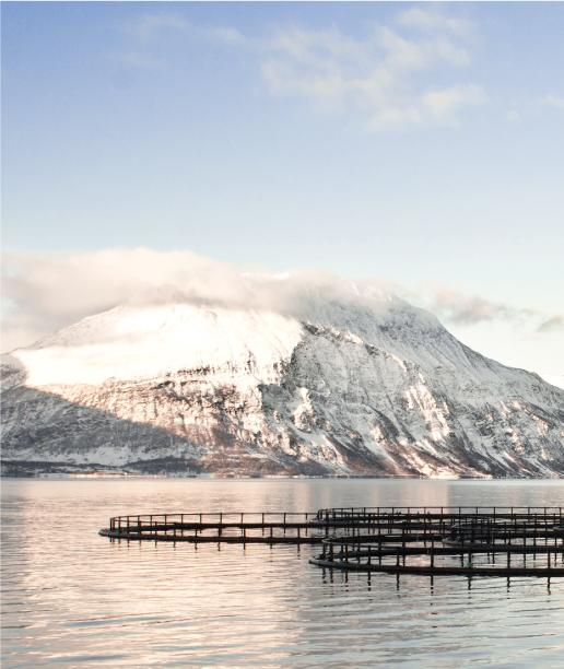 Norvege-marine-sas-saumon-produits-frais-label-rouge-seafood-import-export